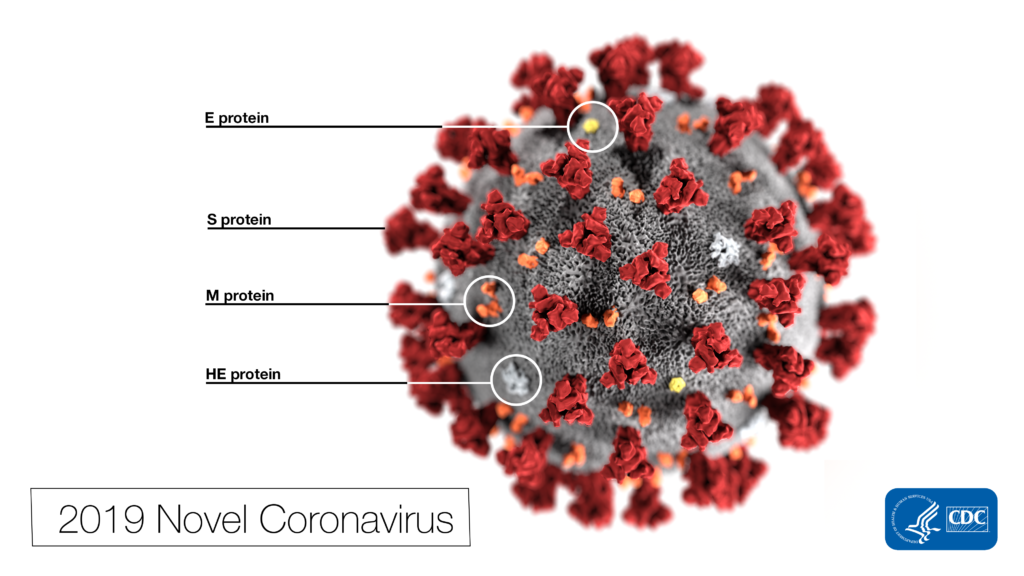 Note the spikes that adorn the outer surface of the virus, which impart the look of a corona surrounding the virion, when viewed electron microscopically. In this view, the protein particles E, S, M, and HE, also located on the outer surface of the particle, have all been labeled as well. A novel coronavirus virus was identified as the cause of an outbreak of respiratory illness first detected in Wuhan, China in 2019.
